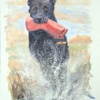 Labrador_532x768