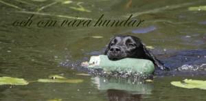 och om våra hundar_1024x502
