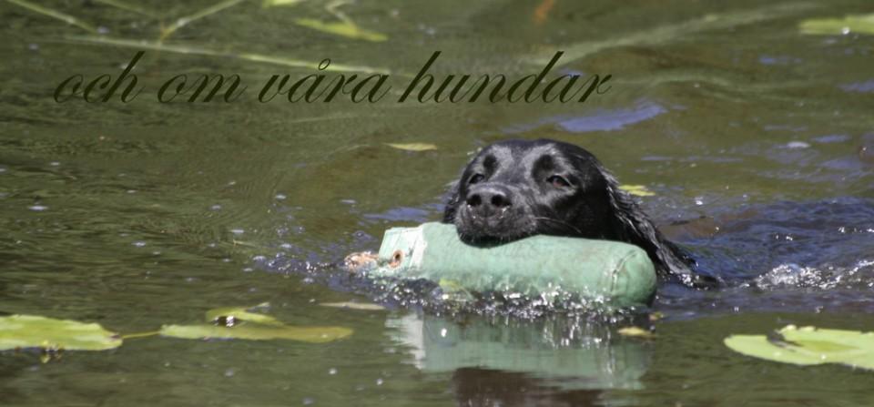 om våra hundar