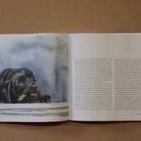 Hundboken 10