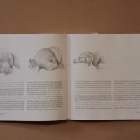 Hundboken 12
