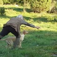 Hundar är livet – kurser