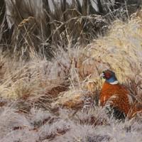 Fasan i frostigt gräs 73x50 cm