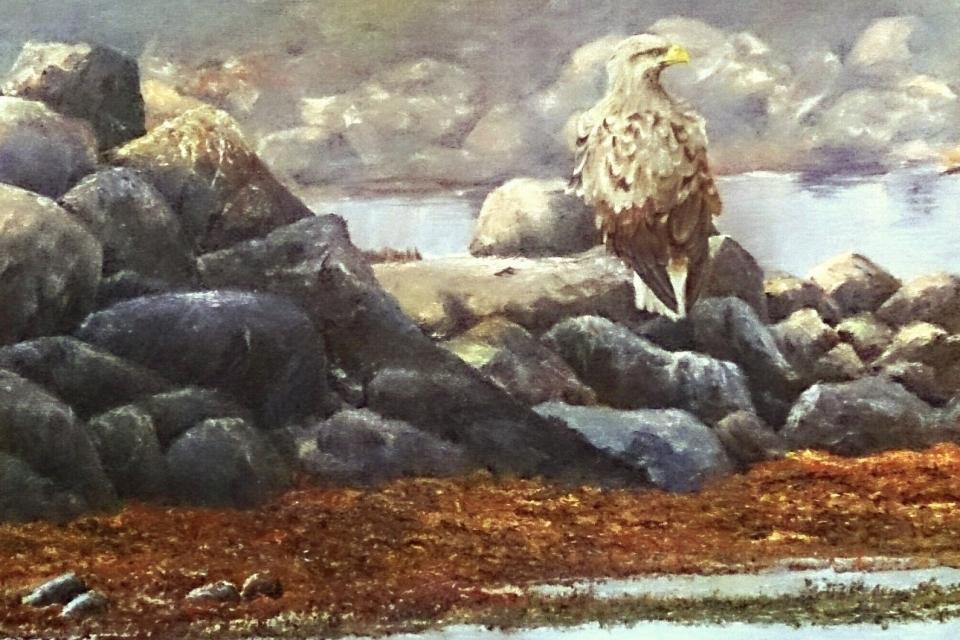 Havsörn på sten (2)_1291x1280